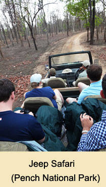 Safari Jeep, Pench National Park
